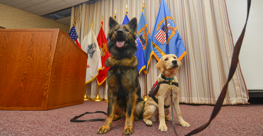 Military Service Dogs Slide Show 🎖️ 📷