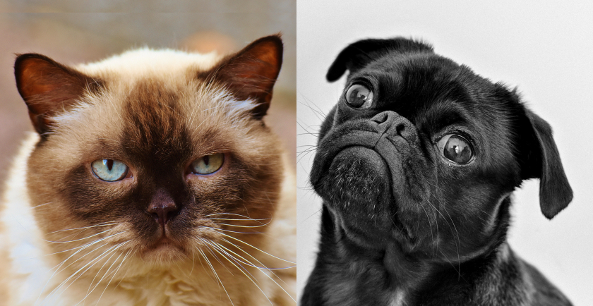 Cat and Dog Peeves About Humans 🐈 🐕
