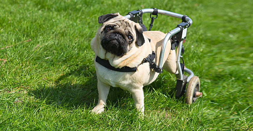 Special Resources for Special Needs Pets 🛠️