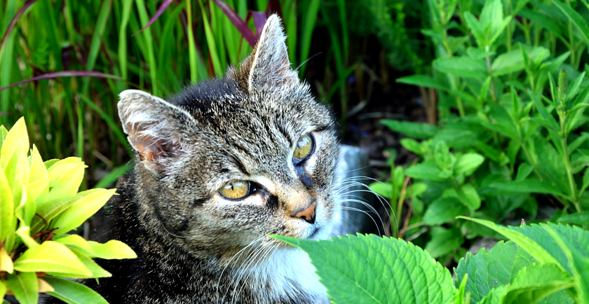 Summer Dangers for Cats: Heatstroke and Bug Bites 🌞