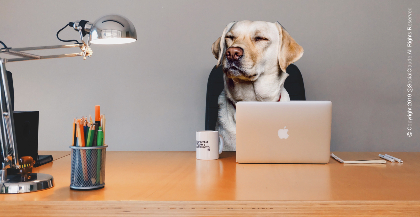 June 21, 2019: Take Your Dog To Work Day 🐶 💻