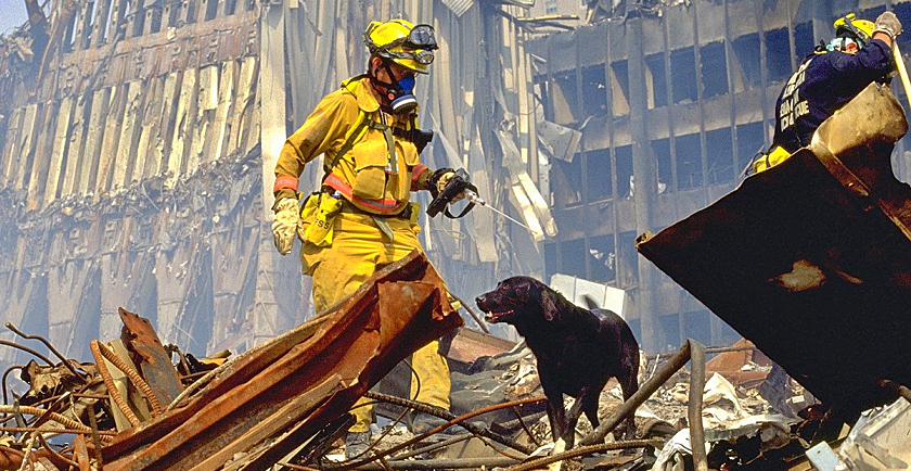 Remembering 9/11 Rescue Dogs 🇺🇸